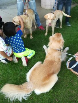 犬譲渡会4